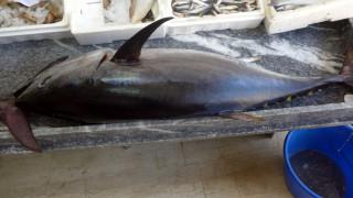 Ψαράς στην Σέριφο έπιασε δύο τεράστιους τόνους (pics&vid)
