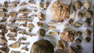 Αρχαία αντικείμενα και νομίσματα έκρυβε 72χρονος στη Χαλκιδική (pics)