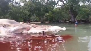 Μυστήριο με γιγαντιαίο κουφάρι που ξεβράστηκε σε ακτή (pics&vid)
