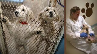 Κακοποιημένοι σκύλοι θεραπεύονται από κρατούμενους (pics)
