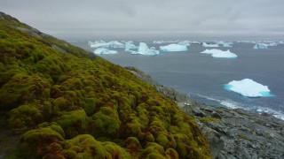 Λιώνουν οι πάγοι και γίνεται πράσινη η Ανταρκτική
