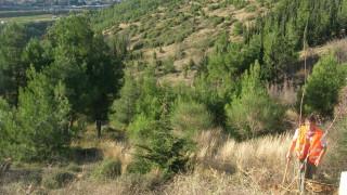 Μεταφέρθηκε το στρατιωτικό βλήμα που βρέθηκε στο δάσος του Σέιχ Σου