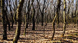 Έρευνες για τη «μαφία του ξύλου» - Πώς καταστρέφουν τα ελληνικά δάση