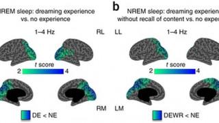 Τον «δεύτερο εγκέφαλο» χαρτογράφησε μια νέα έρευνα με επικεφαλής Έλληνα επιστήμονα