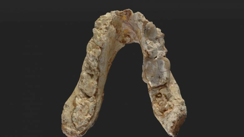 Graecopithecus: Ο πρόγονος του ανθρώπου ήταν Ευρωπαίος