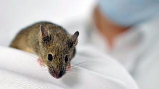 Ελπίδα για... διαστημικές εξωσωματικές, γεννήθηκαν ποντίκια με γενετικό υλικό από το διάστημα