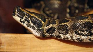 Βγήκε από την εντατική η 8χρονη που τη δάγκωσε φίδι