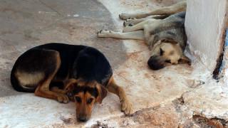 Ταΐστρες και ποτίστρες για τα αδέσποτα ζώα δώρισε στον δήμο ο Εμπορικός Σύλλογος Χανίων