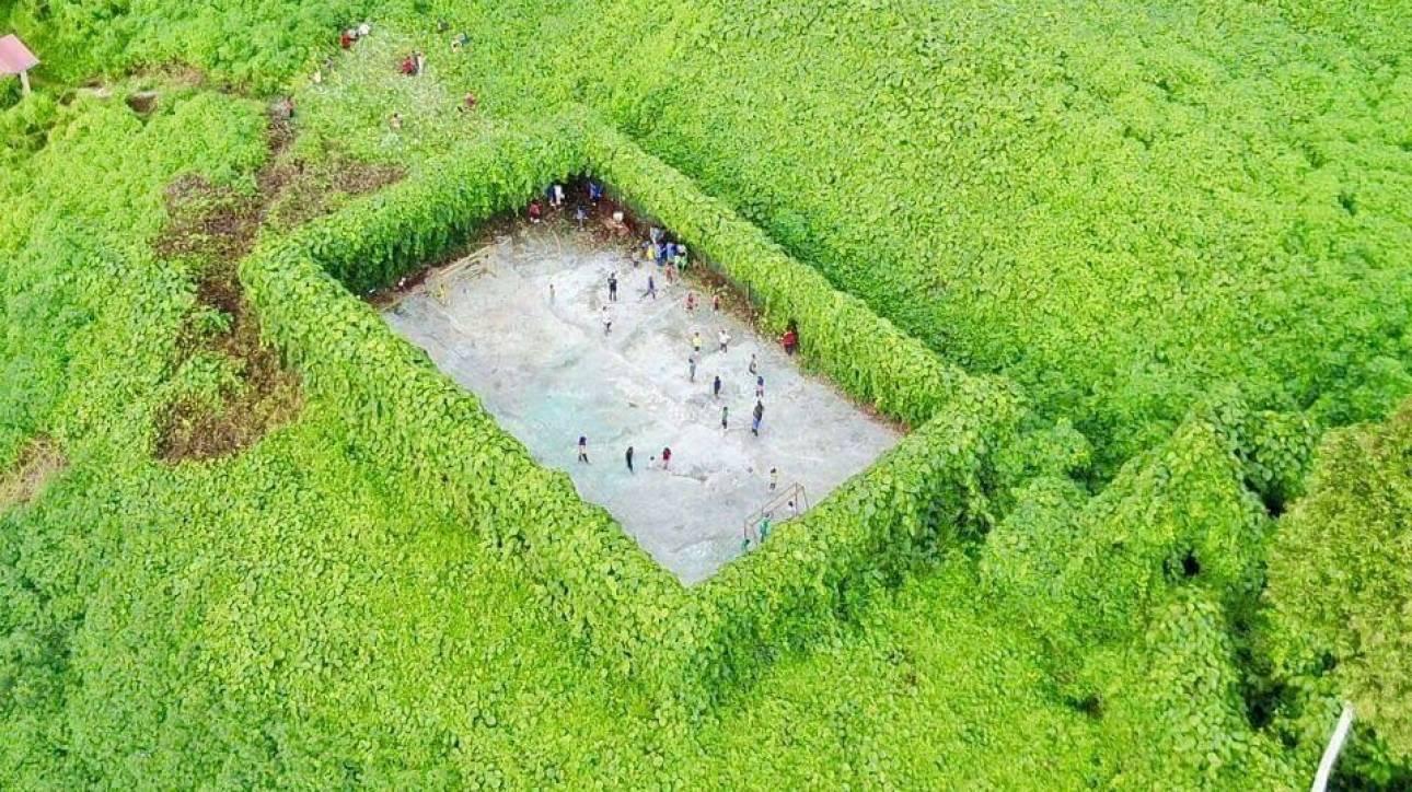 Ποδόσφαιρo μπορείς να παίξεις ακόμα και στη ζούγκλα (pic)
