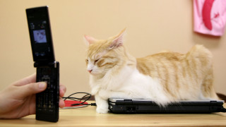 Προσλάβετε γάτα, όχι ψυχολόγο