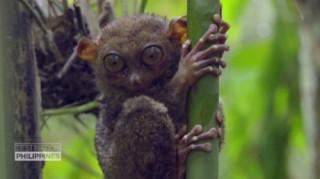 Αυτός είναι ο τάρσιος των Φιλιππίνων – Ένα από τα πιο περίεργα ζώα του πλανήτη