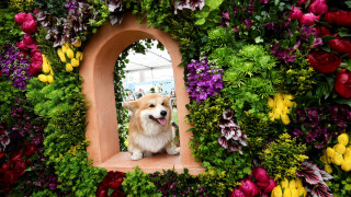 Chelsea Flower Show: Έκρηξη ομορφιάς στη μεγαλύτερη ανθοκομική του κόσμου
