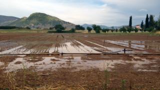 Λάρισα: Ζημιές στις καλλιέργειες από χαλάζι