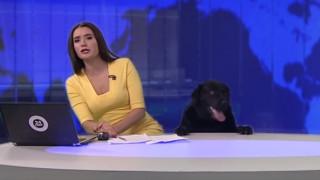 Ρωσία: Λαμπραντόρ εισβάλλει σε στούντιο την ώρα του δελτίου ειδήσεων (vid)