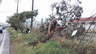 Κρήτη: Ανεμοστρόβιλος χτύπησε τη Σητεία (pics&vids)