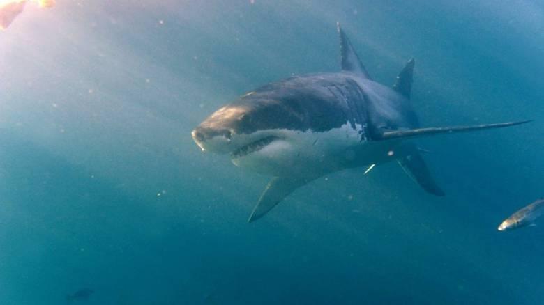 Γλίτωσε την τελευταία στιγμή από τα σαγόνια του καρχαρία (Vid)