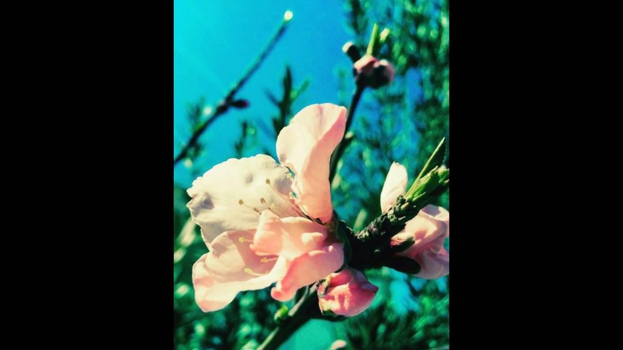 iContact: Λέμε αντίο στην άνοιξη μέσα από τις δικές σας φωτογραφίες