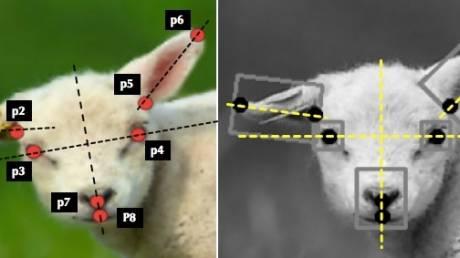 Το πρώτο σύστημα τεχνητής νοημοσύνης που κάνει διάγνωση πόνου σε ζώα