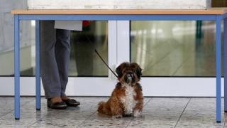 Σκύλος κυνήγησε οδηγό αυτοκινήτου που παρέσυρε την αφεντικίνα του (vid)