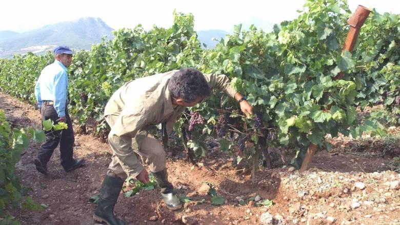 Ανάρπαστο το ελληνικό κρασί στην Ιαπωνία