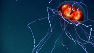 Παγκόσμια Ηµέρα Ωκεανών: Αναζητείται ελπίδα στην άβυσσο της Γης