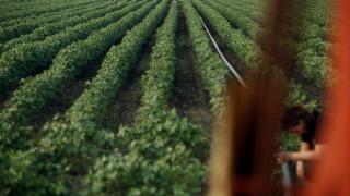 ΟΠΕΚΕΠΕ: Αποζημιώσεις 17,8 εκατ. ευρώ σε αγρότες από τον ΕΛΓΑ