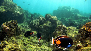 Νέα στοιχεία για τη μόλυνση από πλαστικά στη Μεσόγειο δίνει στη δημοσιότητα το WWF