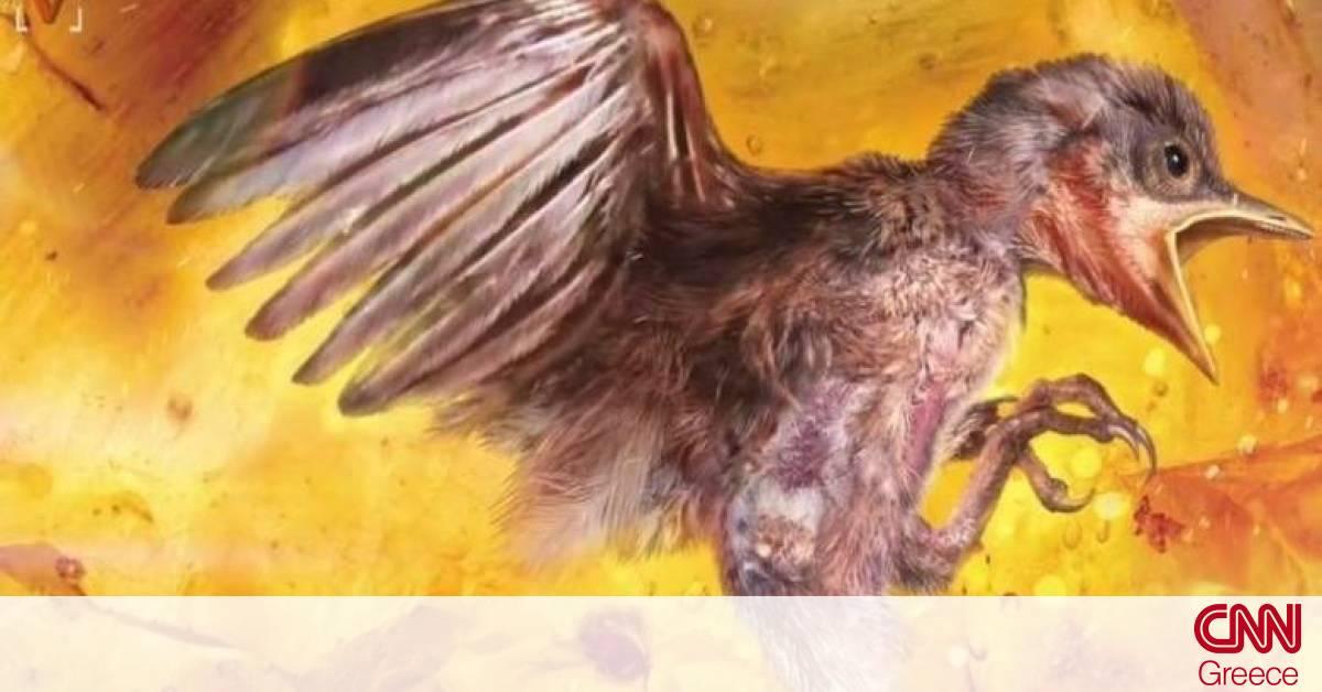 νέος πρώτο μεγάλο πουλί