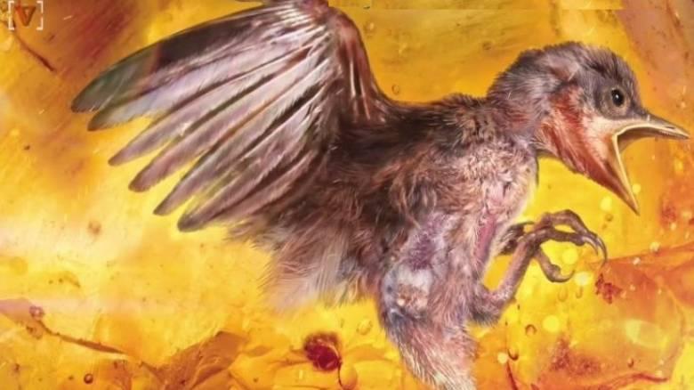 Βρήκαν πτηνό 99 εκατομμυρίων ετών παγιδευμένο σε κεχριμπάρι (vid)