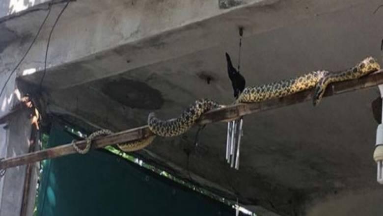 Φίδια έχουν γεμίσει τη Σμύρνη - Πώς συνδέεται το φαινόμενο με τον σεισμό