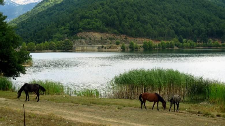 Ιωάννινα: Μετέφεραν τα ναρκωτικά στα αλβανικά σύνορα με… άλογα