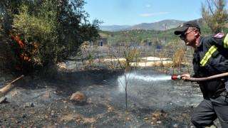 Ηλεία: Φωτιά στο Σούλι Πηνείας