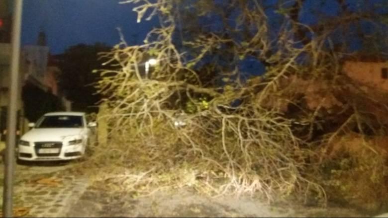 Θεσσαλονίκη: Έπεσαν δέντρα λόγω των ανέμων