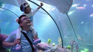 Κίνα: Ανοίγει το πρώτο ενυδρείο της παγκόσμιας αλυσίδας Sea Life (pics&vid)