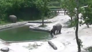 Συγκλονιστικό βίντεο - Δύο ελέφαντες σώζουν το μωρό τους από βέβαιο πνιγμό