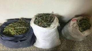 «Πόλεμος» στα ελληνοαλβανικά σύνορα για τα θαυματουργά βότανα