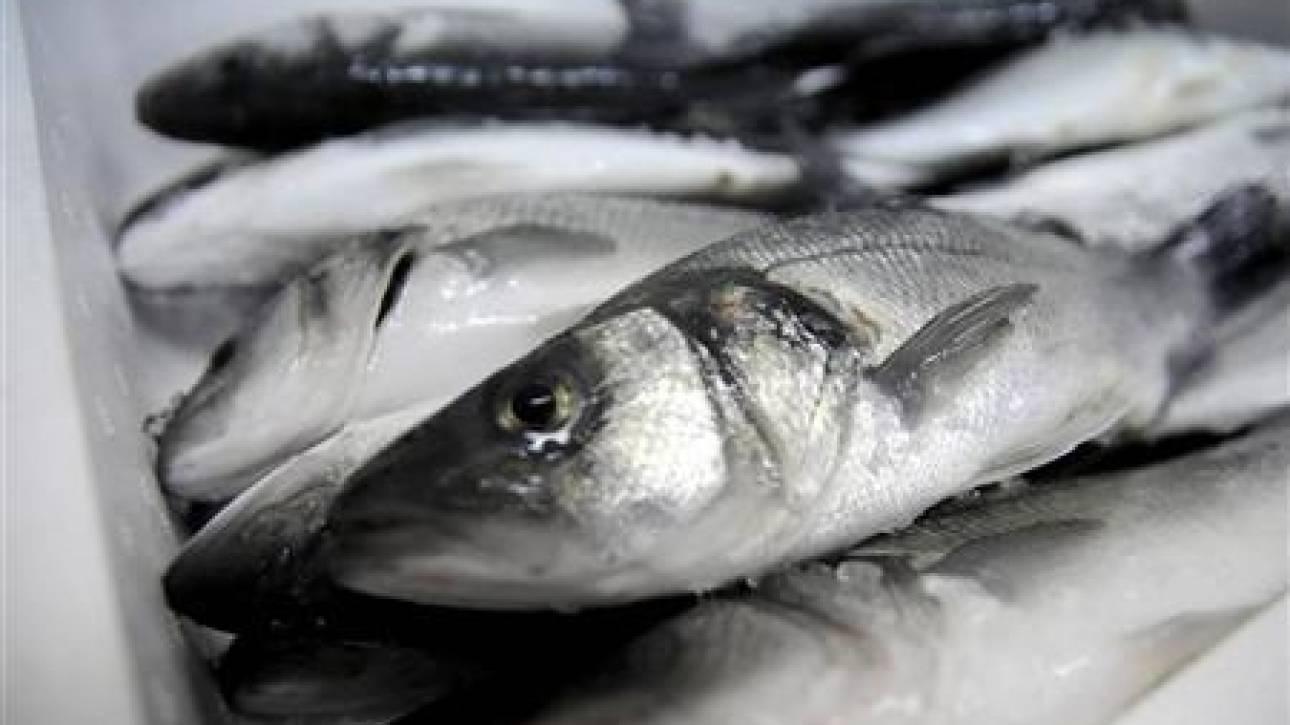 Η κατανάλωση ψαριών μειώνει τους πόνους της ρευματοειδούς αρθρίτιδας
