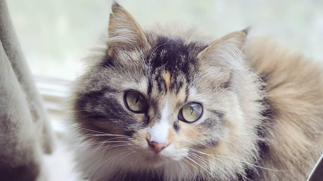 Η γάτα που ξεσήκωσε με τη ...χορευτική φιγούρα της το διαδίκτυο (vid)