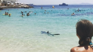 Ισπανία: Ευθανασία σε τραυματισμένο καρχαρία που βγήκε στην ακτή