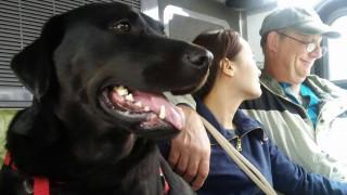 Σκυλίτσα παίρνει το λεωφορείο και πηγαίνει στο πάρκο