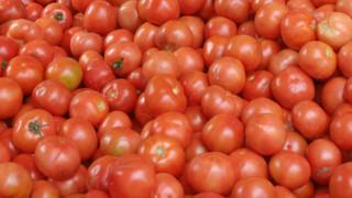 Καταδίκη πέντε ατόμων για απάτη με επιδοτήσεις… ντομάτας