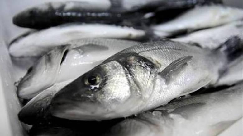 Το 10% των ψαριών που αλιεύονται πετιούνται πίσω στη θάλασσα