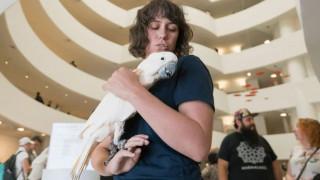 Τι δουλειά έχει o παπαγάλος Pinkie στο μουσείο Guggenheim;