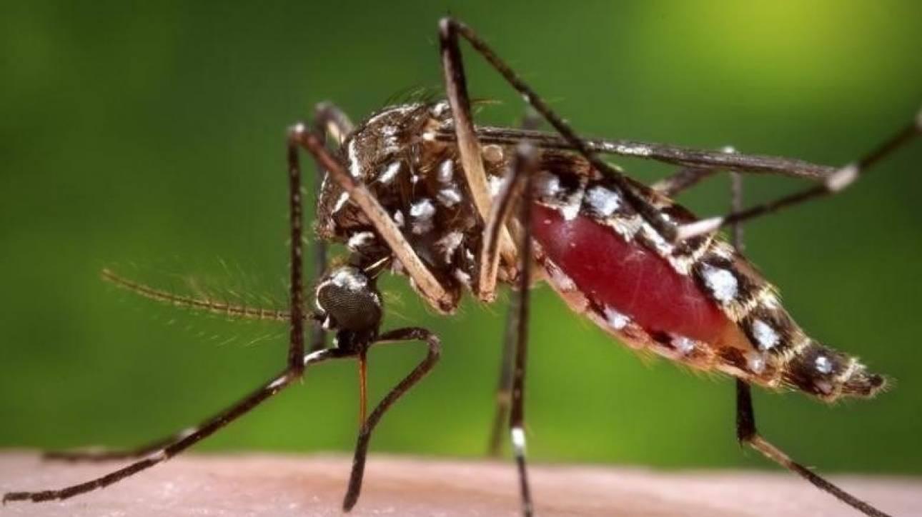 Τι θα συμβεί με τα κουνούπια στις περιοχές της Θεσσαλονίκης τις επόμενες ημέρες