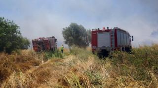 Μάχη της Πυροσβεστικής στη Μεσσηνία - Υπό έλεγχο η φωτιά στο Κρυονέρι