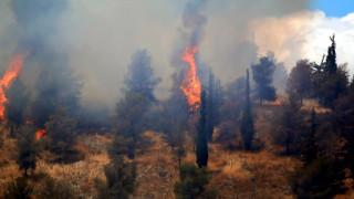 Εκτός ελέγχου η φωτιά στoν Κότρωνα Λακωνίας - Οι φλόγες έφτασαν στις αυλές των σπιτιών