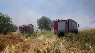 Δύο νέα μέτωπα πυρκαγιάς σε Λακωνία και Χανιά