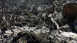Πάτρα: Σε ύφεση η φωτιά στην περιοχή Μαγούλα
