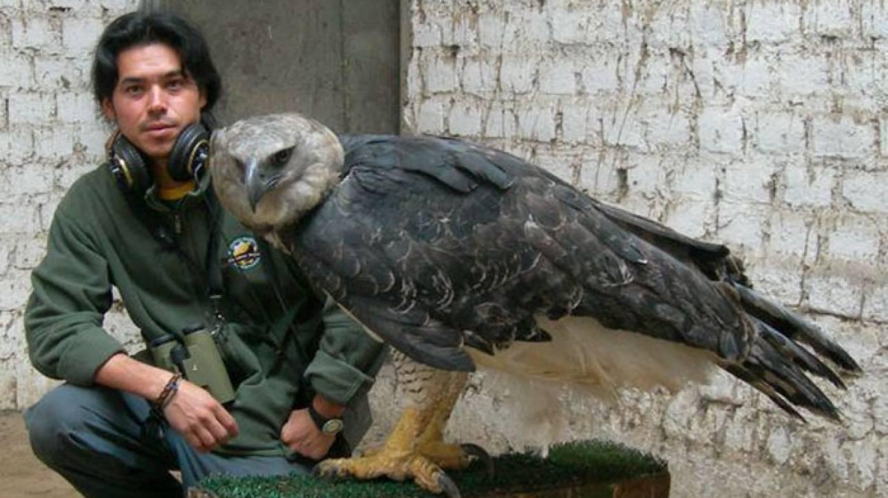 Άρπυια: ο ισχυρότερος αετός στον κόσμο προκαλεί δέος (Pics)