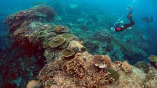 Η UNESCΟ διέγραψε τον Μεγάλο Κοραλλιογενή Ύφαλο από την λίστα κινδύνου